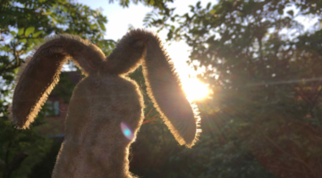 Wabbit-Summer-Day